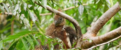 bird resting in tree in ecuador amazon jungle