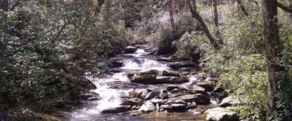 Picture of Wildflowers & Waterfalls: Exploring the Great Smokies