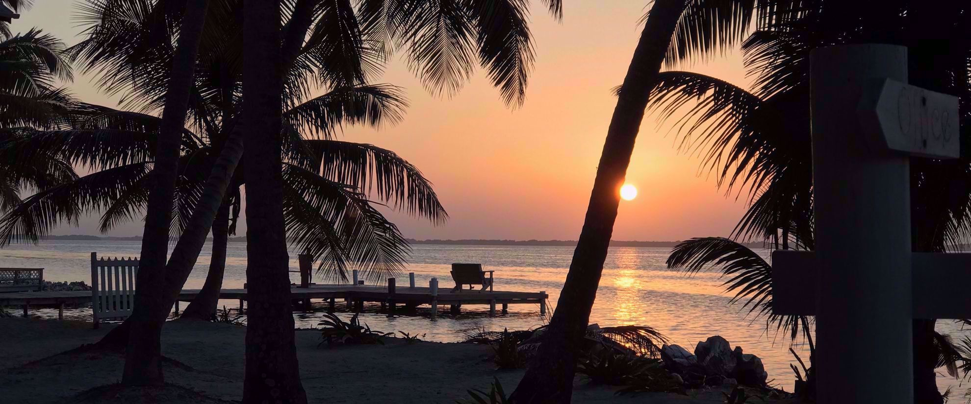 golden sunset with palm trees belize