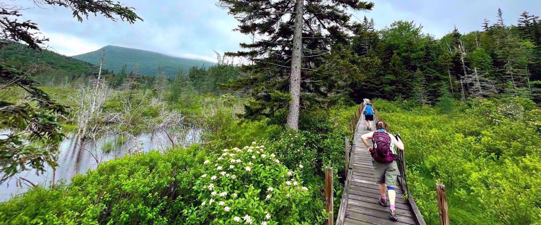 Welch - Dickey loop trail